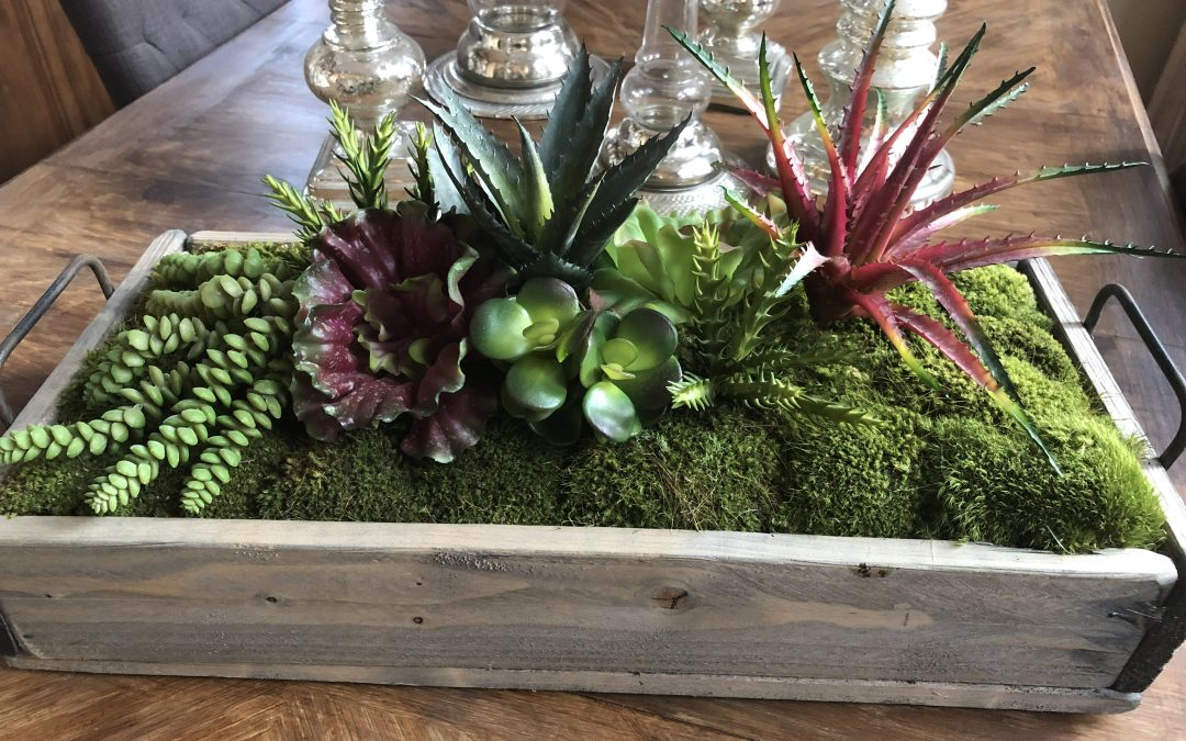Bring the Garden Indoors with Succulents!
